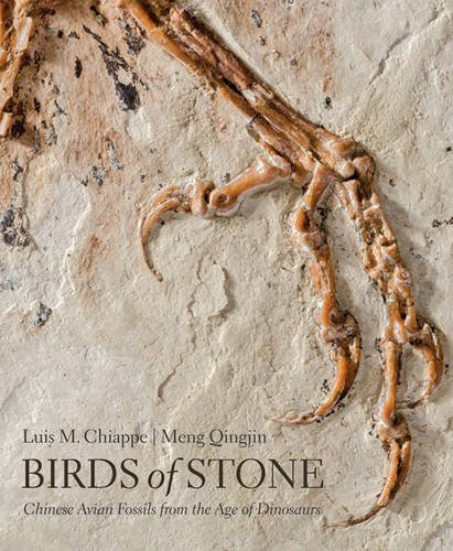 Birds of Stone: Chinese Avian Fossils from the Age of ()