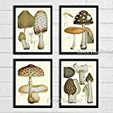 Mushroom Print Set of 4 Antique Botanical Beautiful Edible and Poisonous Brown Beige Natural Mushrooms French Truffle Forest Nature Home Room Decor Wall Art Unframed EAP