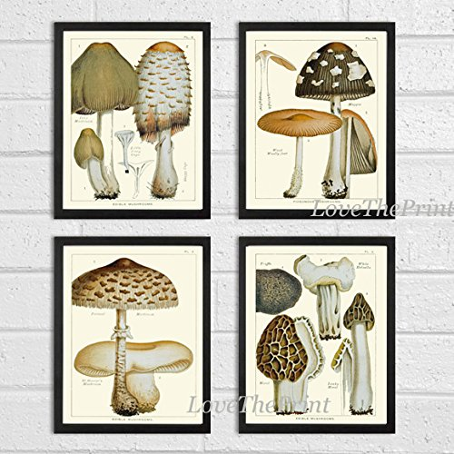 Cheap  Mushroom Print Set of 4 Antique Botanical Beautiful Edible and Poisonous Brown..