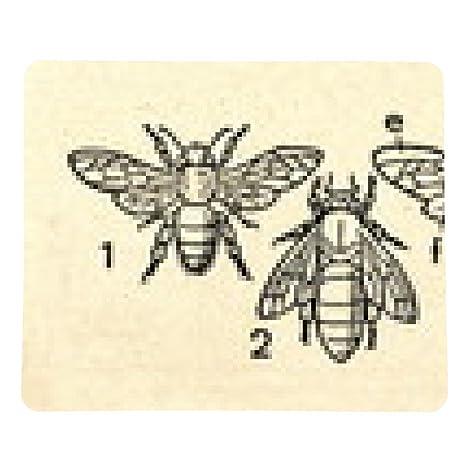 alfombrilla de ratón Western abeja de la miel: Trabajador (1), reina (