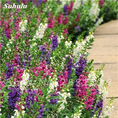100 semillas piezas de Gypsophila mezcla Bonsai Hermosa Flor ...