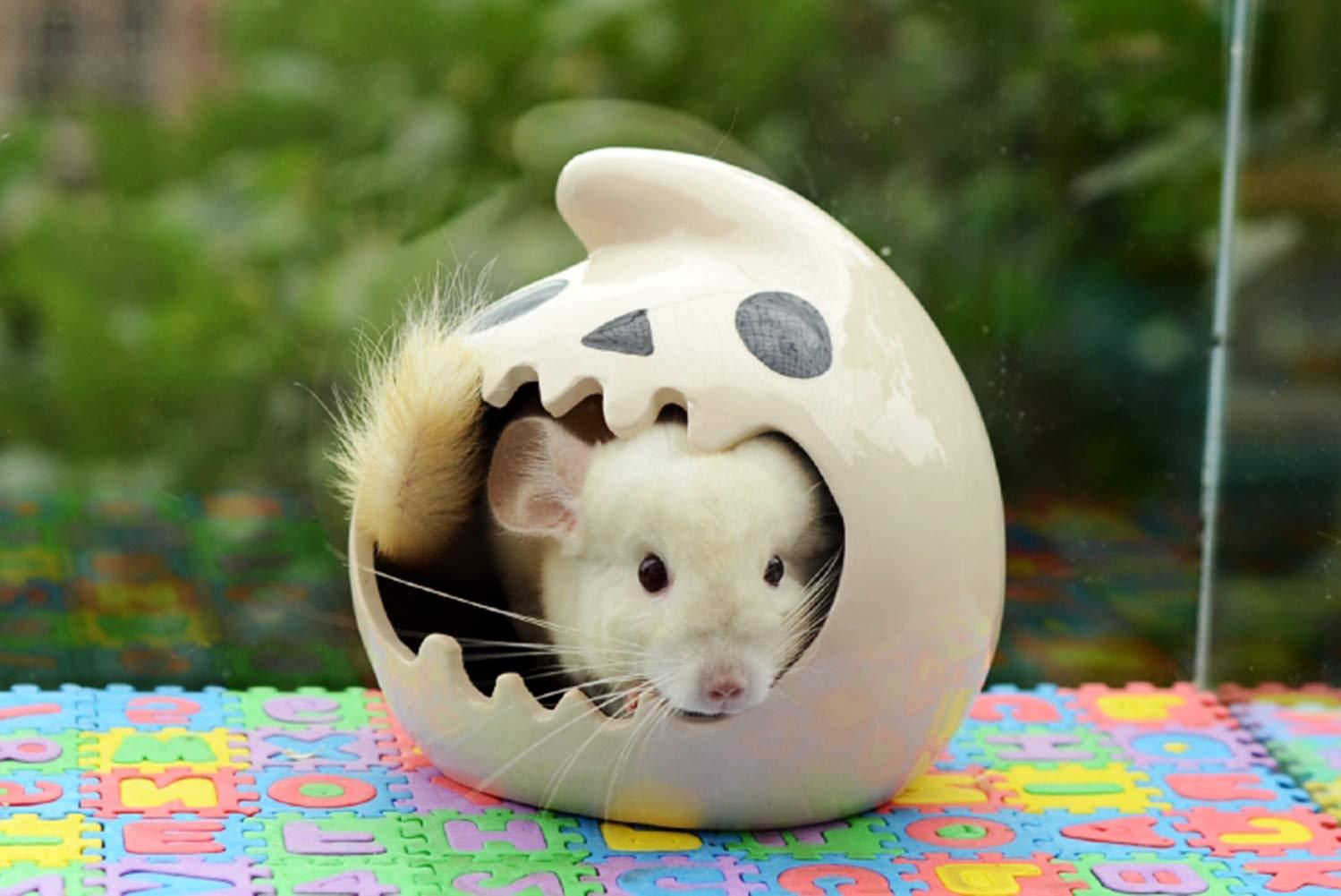 Megawa Casa para Mascotas con Forma de espátula de cerámica para Chinchilla, hámster, mesocriceto, auratus: Amazon.es: Productos para mascotas