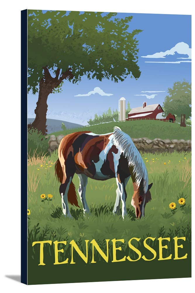 tennsesse – Horse in Field 24 x 36 Gallery Canvas LANT-3P-SC-55864-24x36 B0184B3UGW  24 x 36 Gallery Canvas