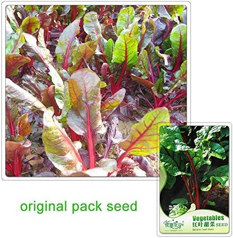 35 semillas / pack, semillas de remolacha roja de la hoja Semilla Líder de plantas de jardín de vegetales: Amazon.es: Jardín