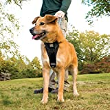 Kurgo Tru-Fit No Pull Dog Harness and Easy Dog Walking Harness with Pet Seatbelt Tether for Car, Black, Large