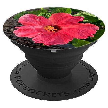 Amazoncom Hibiscus Flower Puerto Rican Amapola Gardening Gift