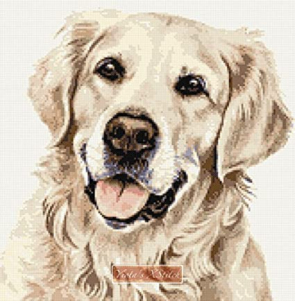 "Cross Stitch Kit 8/"" x 10/"" 14 Count Aida Anchor Labrador Dog in Brown /& Black"