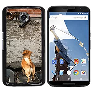 Hot Style Cell Phone PC Hard Case Cover // M00115611 Dog Cat Growl Watch Curious // LG Google Nexus 6