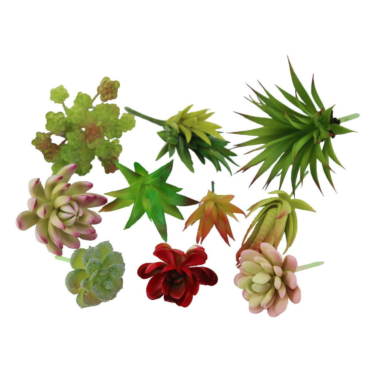 Biowow 10個入り 多種多様なサイズの多肉植物 エチェベリアの瑪瑙 フローラルアレンジメント B07GB3YKYM