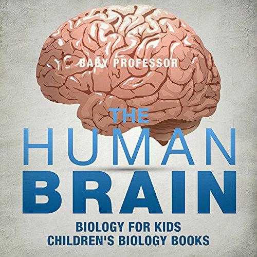 The Human Brain - Biology for Kids |