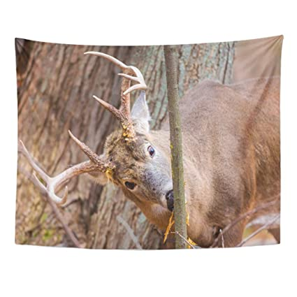ce92c5b066 Emvency Wall Tapestry Brown Animal White Tail Buck Deer in Boreal Forest  Late Autumn Quebec Canada