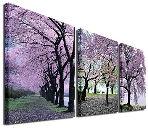 cherry blossom picture - 4