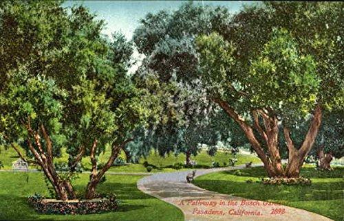 a-pathway-in-the-busch-gardens-pasadena-california-original-vintage-postcard