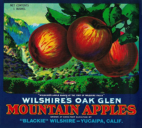 Wilshire's Oak Glen Apple - Vintage Crate Label (16x24 Fine Art Giclee Gallery Print, Home Wall Decor Artwork Poster)