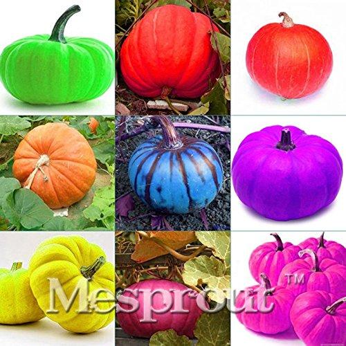 New 9 kind of Color Rare Pumpkin 10+ Seeds - 1