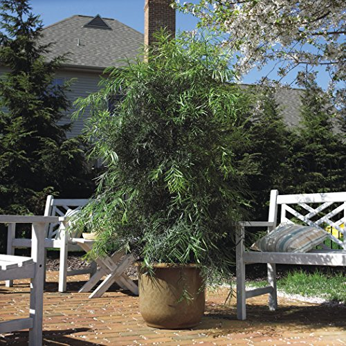extra large planters for outside