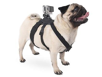 micros2u Arnés/Correas de Perro para montar una cámara de acción ...