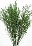 GreenFloralCrafts Caspia (Floral filler greenery) Dried Flowers, Grasses - Green