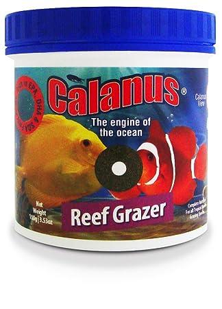 Calanus Micro Grazer 45 g Alimento Pastillas peces acuario marino Reef BCUK: Amazon.es: Productos para mascotas