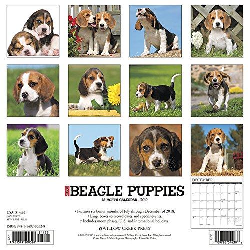 Just Beagle Puppies 2019 Wall Calendar (Dog Breed Calendar)
