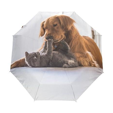 Amazon com: Naanle Golden Retriever Dog British Shorthair Cat Auto