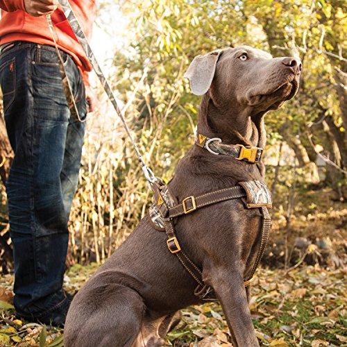 Browning Dog Walking Harness Circuit Diagram Symbols