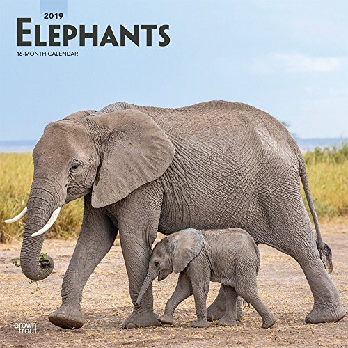 Elephants 2019 12 x 12 Inch Monthly Square Wall Calendar, Wildlife Animals Circus (Multilingual - Calendar Elephant