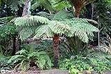 IR Plants & gardens Plants
