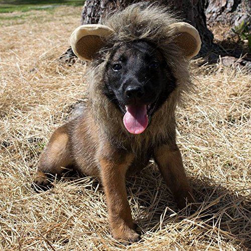 Cat Costume Funny Lion Mane Wig for Party Dress Up, Small Dogs with Bell Charm (Pirate Attire Ideas)