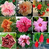 100% Original 100pcs 15kinds Multicolor Hibiscus seeds HIBISCUS ROSA-SINENSIS seeds bonsai plant flower seeds