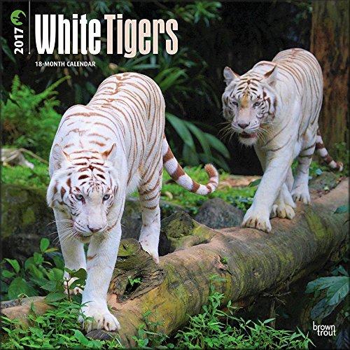 White Tiger Calendar 2017 ~ Deluxe Wall Calendar (12x12)