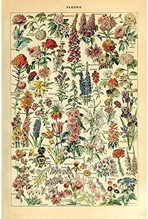 VINTAGE FLOWERS Art Print Poster Dahlias Floral Florist Floristry Garden Design