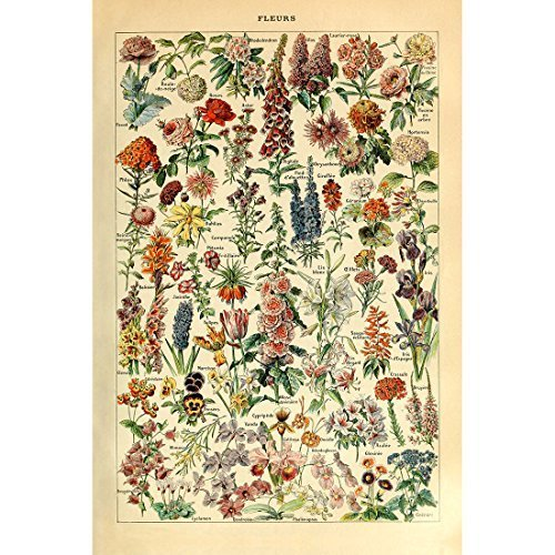Meishe Art Vintage Poster Print Flower Floral Botanical Collections Garden Flowers and Plants Identification Reference Chart Diagram Home Wall Decor from Meishe Art
