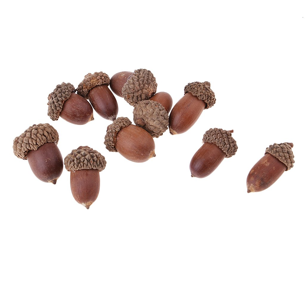 Pack 20 Mini Small Natural Acorns Table Ornaments in Bulk Dried Flowers for Christmas Decoration or Crafting Floral Designing