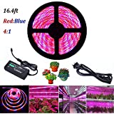 Lahoku LED Plant Grow Strip Light, 16.4ft SMD 5050 Waterproof Full Spectrum Red Blue 4:1 Rope Strip Grow Light with Power Adapter for Greenhouse Hydroponic Plant (5M)