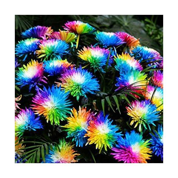 Ncient 20/50/100 Semi Sementi di Margarita di Color Di Arcobaleno Semi di Fiori Rari Fiori Piante per Orto Giardino… 3 spesavip