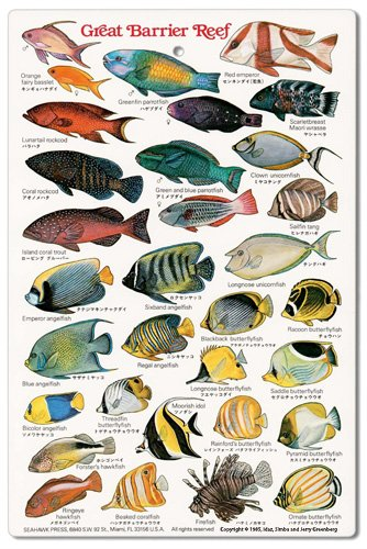 (Great Barrier Reef Fishwatchers Fish Guide ID Card)