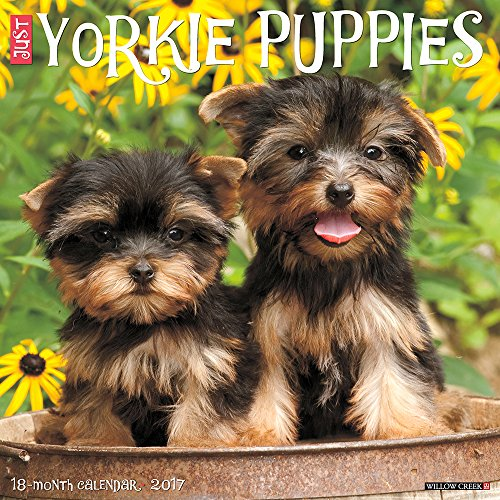 - Just Yorkie Puppies 2017 Wall Calendar (Dog Breed Calendars)