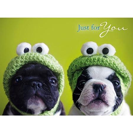Kermit Pug Dogs Birthday Card Amazoncouk Kitchen Home