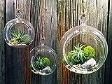 4''/5''/6'' Mixed Sizes Globe Plant Terrarium Glass Flat Bottom Hanging Planter Orb Vase Mixed Size Glass Round Globe Terrarium