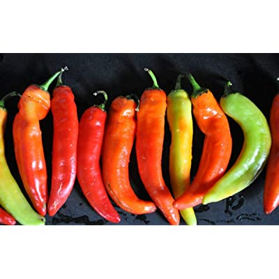 Inferno F1 Hybrid Hot Pepper Seeds - Peppers are very hot and turn! (25 - Seeds) : Garden & Outdoor