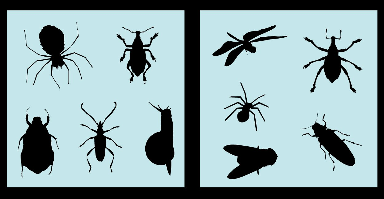 Auto Vynamics - STENCIL-ANIMALS-INSECTSET01-10 - Detailed Bugs & Insects Stencil Set - Everything From Spiders to Roaches to Dragon Flies! - 10-by-10-inch Sheets - (2) Piece Kit - Pair of Sheets