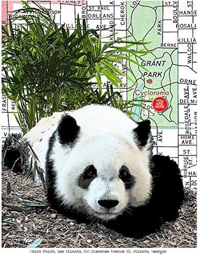 "Panda at the Atlanta Zoo, Atlanta, Georgia, art print, fine art print, souvenir print, original map print, 8.5"" x 11"" unmatted and unframed."
