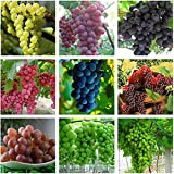 buy Best Garden Seeds Heirloom Mixed 9 Types of Grape Seeds, 30 Seeds, Professional Pack, tasty dense juicy fruits now, new 2020-2019 bestseller, review and Photo, best price $13.05