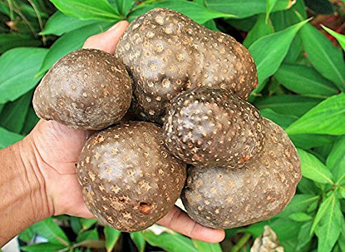 Dioscorea bulbifera Air Potato Vine tubers 1 pound
