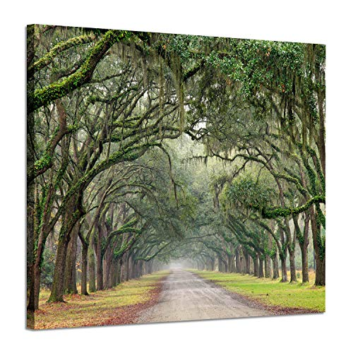 Photographic Canvas Art - Hardy Gallery Landscape Artwork Pictures Canvas Prints: Spanish Moss Covered Green Oak Trees on Forest Path in Fall Photographic Image for Wall Arts (24