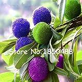 10 particelle / Semi Borsa Arbutus unedo Corbezzolo Delicious cinese di frutta per un sano e il giardino domestico di facile Grow