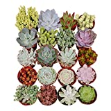 Shop Succulents Assorted Succulent (Collection of 40), 4