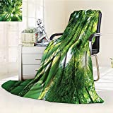 YOYI-HOME Premium Duplex Printed Blanket | Super Soft, CozyLow Angle View of Bamboo Tree Tops Asian Zen Tranquil Lands Jungle Meditation Spa Theme Green All Season for Couch or Bed /W59 x H47