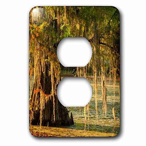 3dRose Danita Delimont - Trees - USA, Louisiana, Lake Martin. Cypress tree in swamp. - Light Switch Covers - 2 plug outlet cover - Outlet In Cypress